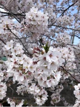 春ですね~(^-^)_20190410_2