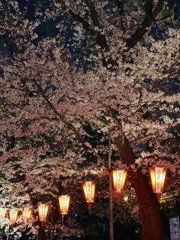 桜の季節~☆_20190416_1
