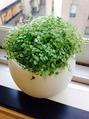 観葉植物新しくなりました!
