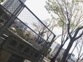 南池袋公園♪