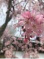 【カラー】チェリーブロッサム☆