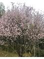 もう、春、、