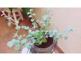 新しい植物たち