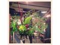 今日の植物☆