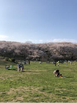 お花見_20180401_1