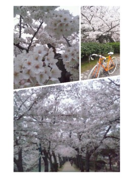 お花見!!
