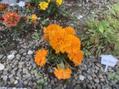 かわいいお花達
