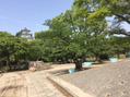 明石公園☆