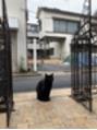 猫ちゃん[高田馬場]