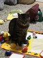 猫のにぼし日記