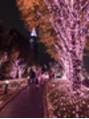 【草加 LOHAS】クリスマスツリー