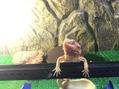 鈴木の爬虫類 プロデュース陽光台