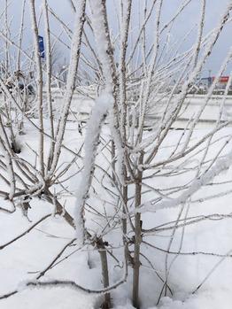 雪_20190115_1
