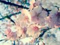 4月の営業日変更について