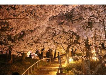 桜_20210415_1