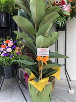 いただいた、お祝いのお花です!2_20200115_1