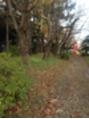 秋の小樽散歩