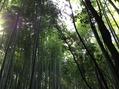これまた京都