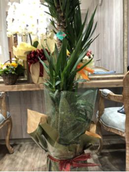 いただいた、お祝いのお花です!2_20200115_4