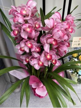 いただいた、お花を載せさせていただきます!3_20200115_4