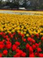 【花】×【春】
