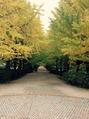 秋の紅葉 見頃です。