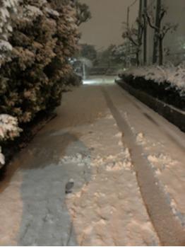 【SAKI°*.】雪だぁぁぁあ!!!!【BOB関内】_20180123_3