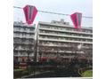 ♪目黒川・雪と桜♪