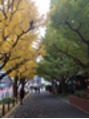 神宮外苑前銀杏並木!