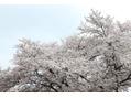 エムタニグチオーブ(M.TANIGUCHI o.r.b)新年度になります。