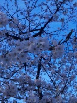 春、きました☆