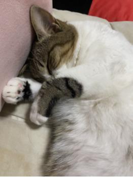 猫ネタ_20210728_1