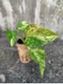 観葉植物のその後、、、