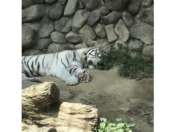 ~動物園~_20180613_1