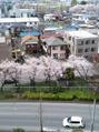 春の便り~April~