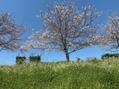 春になりましたね!【N°3hair lounge 溝の口店】