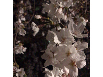 お花見◎_20190328_2