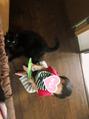 黒猫 ごまの助 オス 6歳