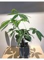 パルフェの植物(*^_^*)