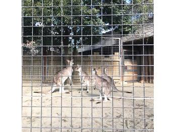 上野動物園に◎_20180131_3