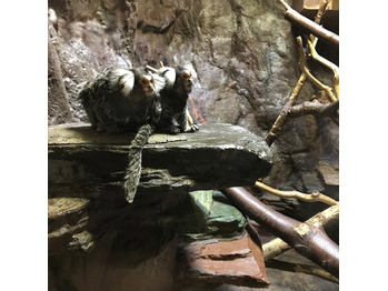 上野動物園に◎_20180131_4