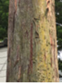 蛇の木登り
