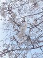 【高柳】春のお便りと嬉しい出来事☆
