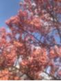 #桜#お花見#春#ショコラ阿倍野