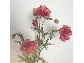 《saori》7月スタート【Libera表参道】_20170701_4
