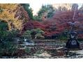 【紅葉】 日比谷公園にて