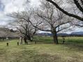 春が来ました^ ^