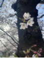 4月スタート!☆前半のお休みのご案内も!