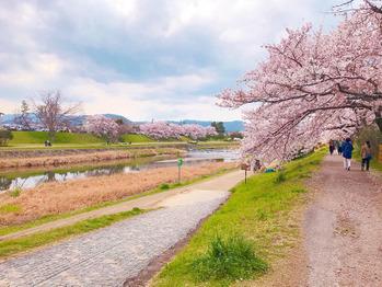 お花見 in 京都_20190410_3