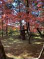 オーク 学芸大学(OAK)京都の紅葉